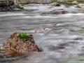 Deua River 3