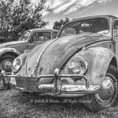 Old Beetles